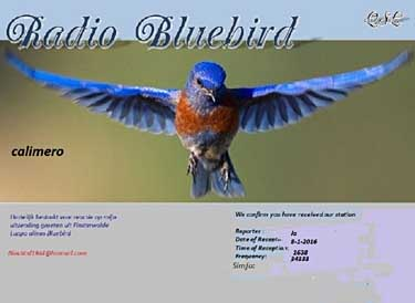 qsl radio calimero (bluebird) pirate mw